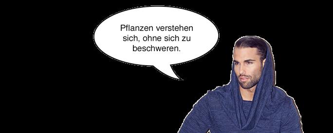 David Pflanzen