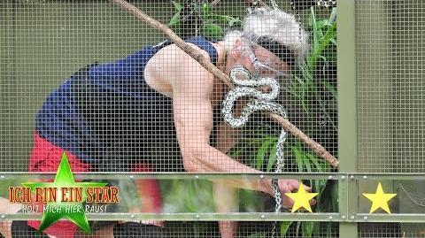 Dschungelcamp 2019 Peter Orloff wird in seiner Dschungelprüfung zum Krokodil-Flüsterer