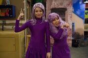 Purpleheads