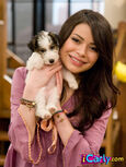 Carly with puppy