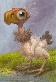 Codor chick