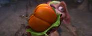 Buck baby pumpkin
