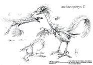 Archaeopteryx+C