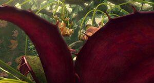 IA3 carnivorousplant-10
