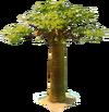 Baobab tp