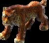 Animal-Leopard