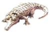 Animal-AlbinoAlligator