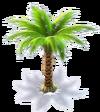 Tp palm