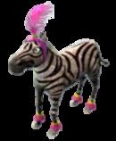 Clean circ zebra