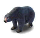 Animal-BlackBear