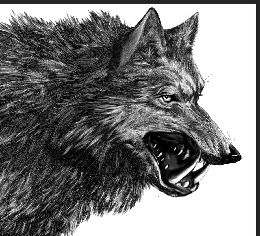direwolf a song of ice and fire wiki fandom powered by wikia