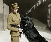 Sable chief with his handler