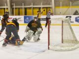 Guelph Gryphons women's ice hockey