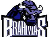 Texas Brahmas