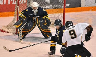 Bisons-at-lakehead-2010-1