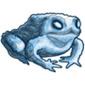 Frozen Toad