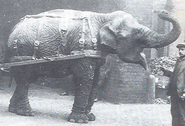 Lizzie Elephant