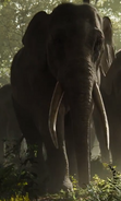 Hathi Jungle Book 2016
