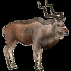 Greater Kudu (Eryel)M