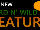The All-New Weird N' Wild Creatures