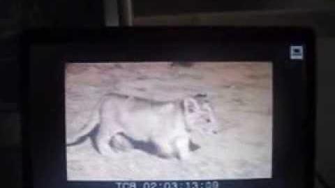 The Lion's Tale Sneak Peek