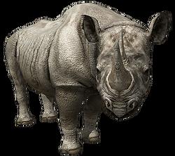 ADblackrhino