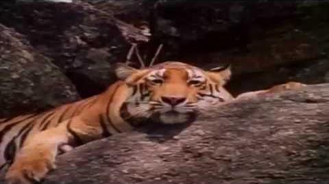 Big Cat 7 Music Video (READ DESCRIPTION BELOW)