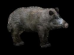 Wildboar HENDRIX