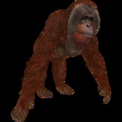 Orangutan (Aurora Designs)