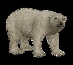 AD-polar-bear-2