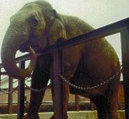 Fanny the elephant