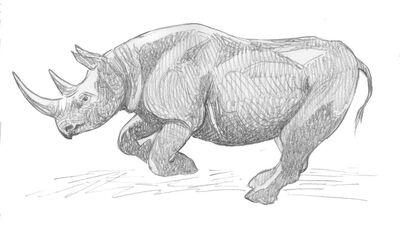 Charging Rhino Drawing