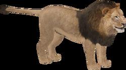 Lion (Zebrasorus) M