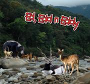 Indian Animal EEnE Poster