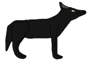 Jacob the Black Wolf