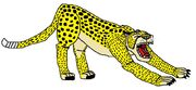 Yawning and Stretching Cheetah (1)