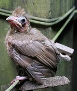 S-IN-bird3