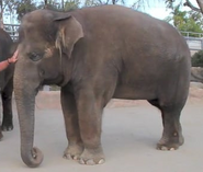 Berry the Elephant