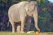 Photo Of Winkie At The Elephant Sanctuary In Tennessee