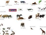64 Zoo Lane: The Movie