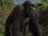 The New King Kong Adventures