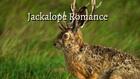 Jackalope Romance title card