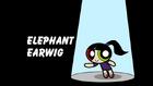 Elephant Earwig title card