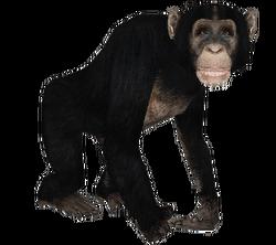 ADchimpanzee