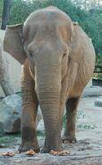Mona elephant