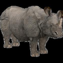 Indian Rhinoceros (Aurora Designs) 1