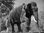 ELEPHANT BOY 01