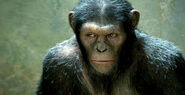 Rise-of-planet-of-the-apes-stills