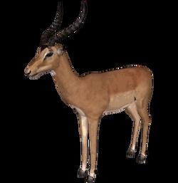 Impala (Dutch Designs)