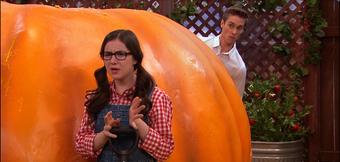 Next of pumpkin